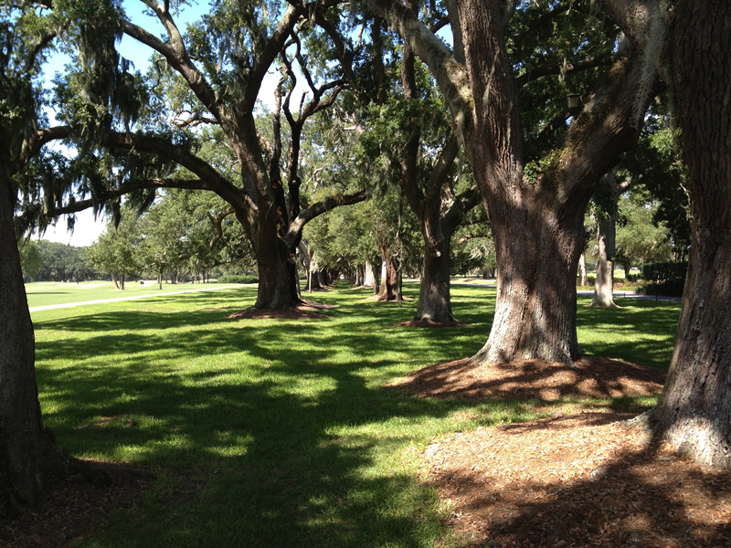 Avenue of Oaks on St. Simons Island