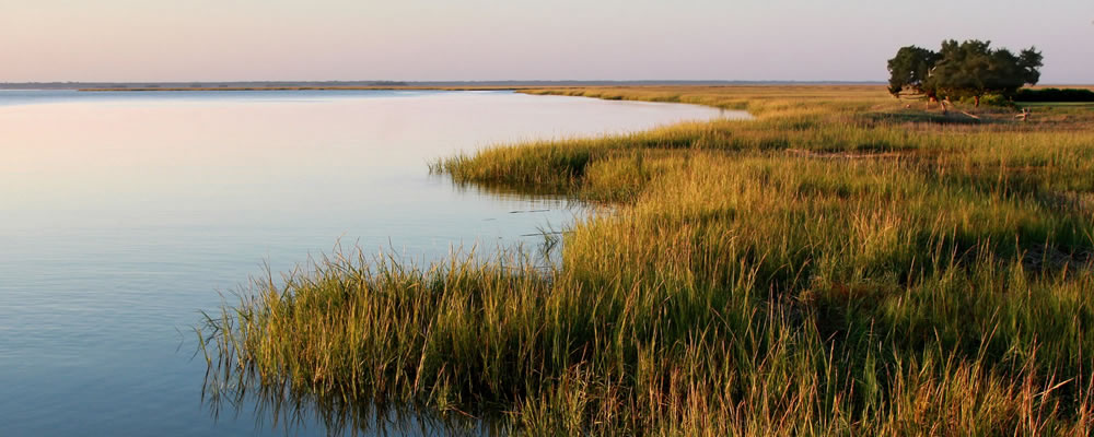 Marshes of St. Simons Island