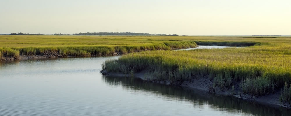 St. SImons Island Natural Wonders