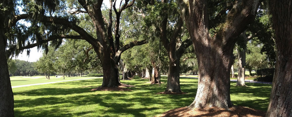 Live Oaks on St. Simons Island